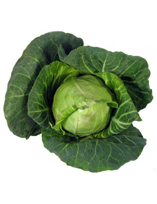Hispi Cabbage.