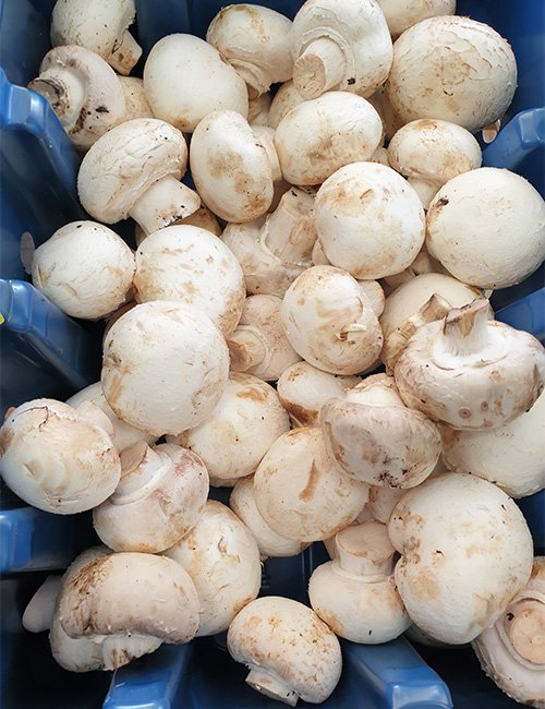 Locally grown cup mushrooms.