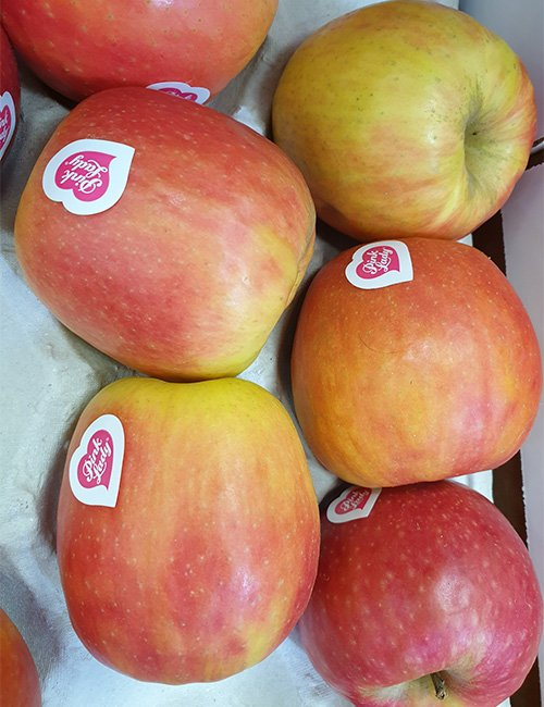 Apples Pink Lady