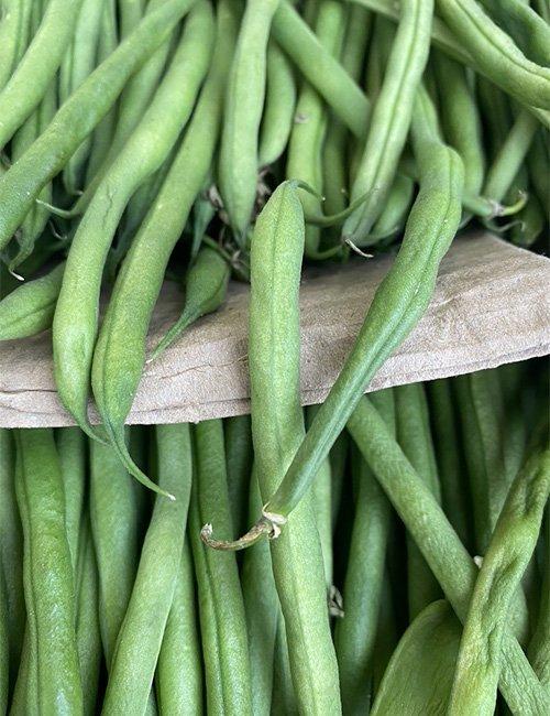 Spanish Broad Beans.