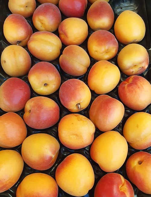 Apricots at The Apiary.